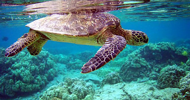 Cayman Oceans Day